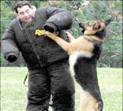 protection de dresseur de chiens d'attaque