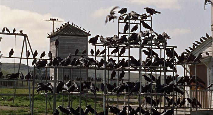 Les Oiseaux, d'Alfred Hitchcock - corbeaux sur fils