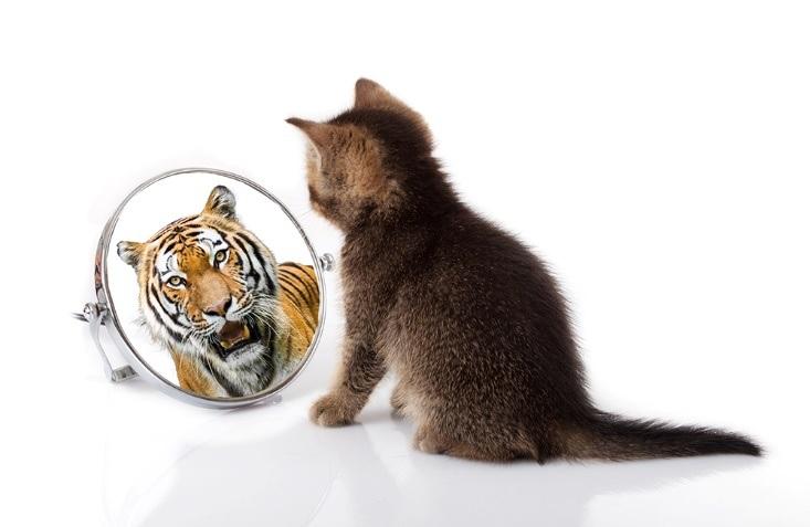 petit chat regarde miroir